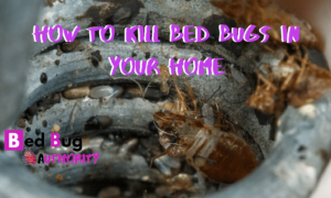 KILLING BED BUGS AT HOME