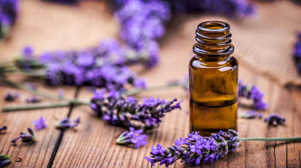 bed bugs and lavender oil