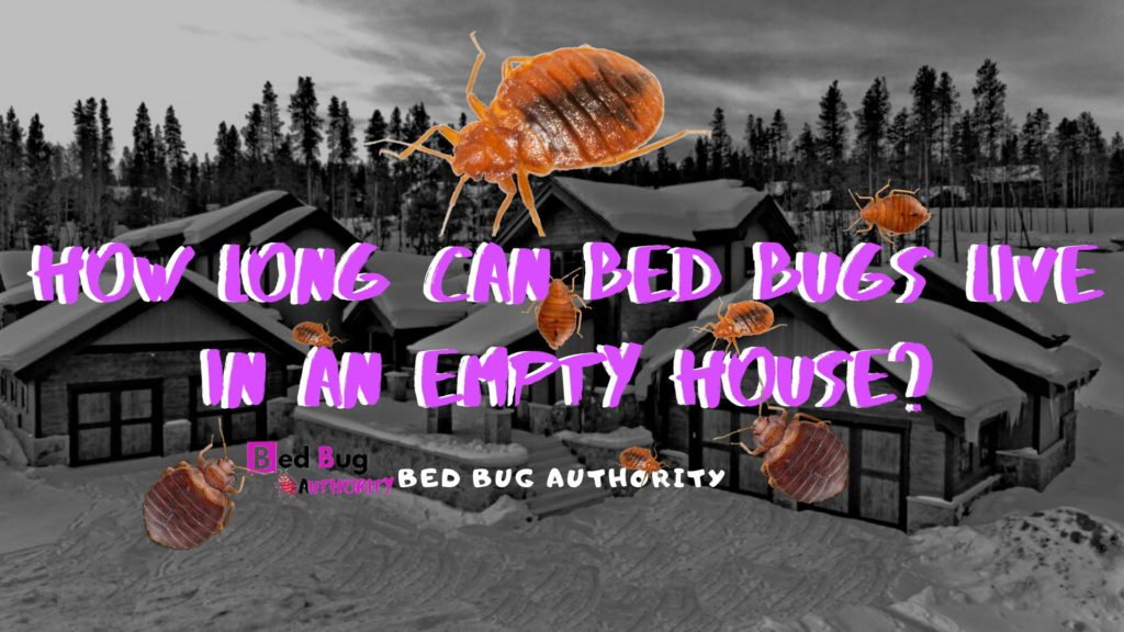 bed bug gone